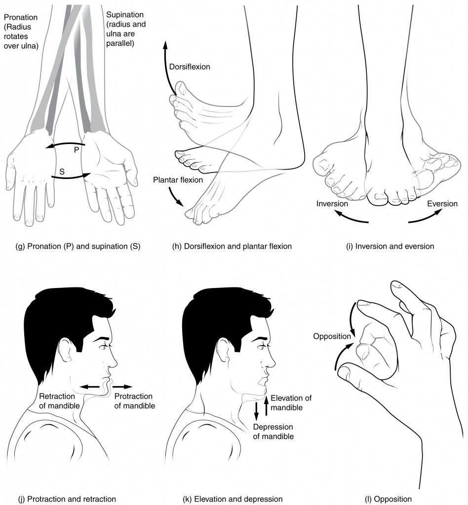 This multi-part image shows different types of movements that are ...
