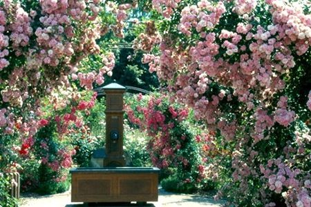 Gardening Express Deal of the Day   Groupon   Climbing Roses ...