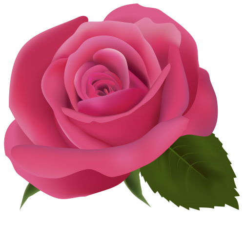 Pink Rose Png Clipart Image Red Rose Png Rose Flower Png Pink Rose Png