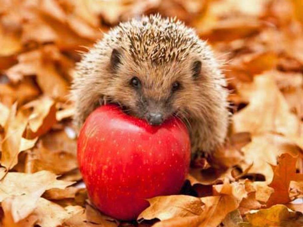 7 Tipps Fur Einen Igelfreundlichen Garten Igel Im Garten Was Fressen Igel Igel