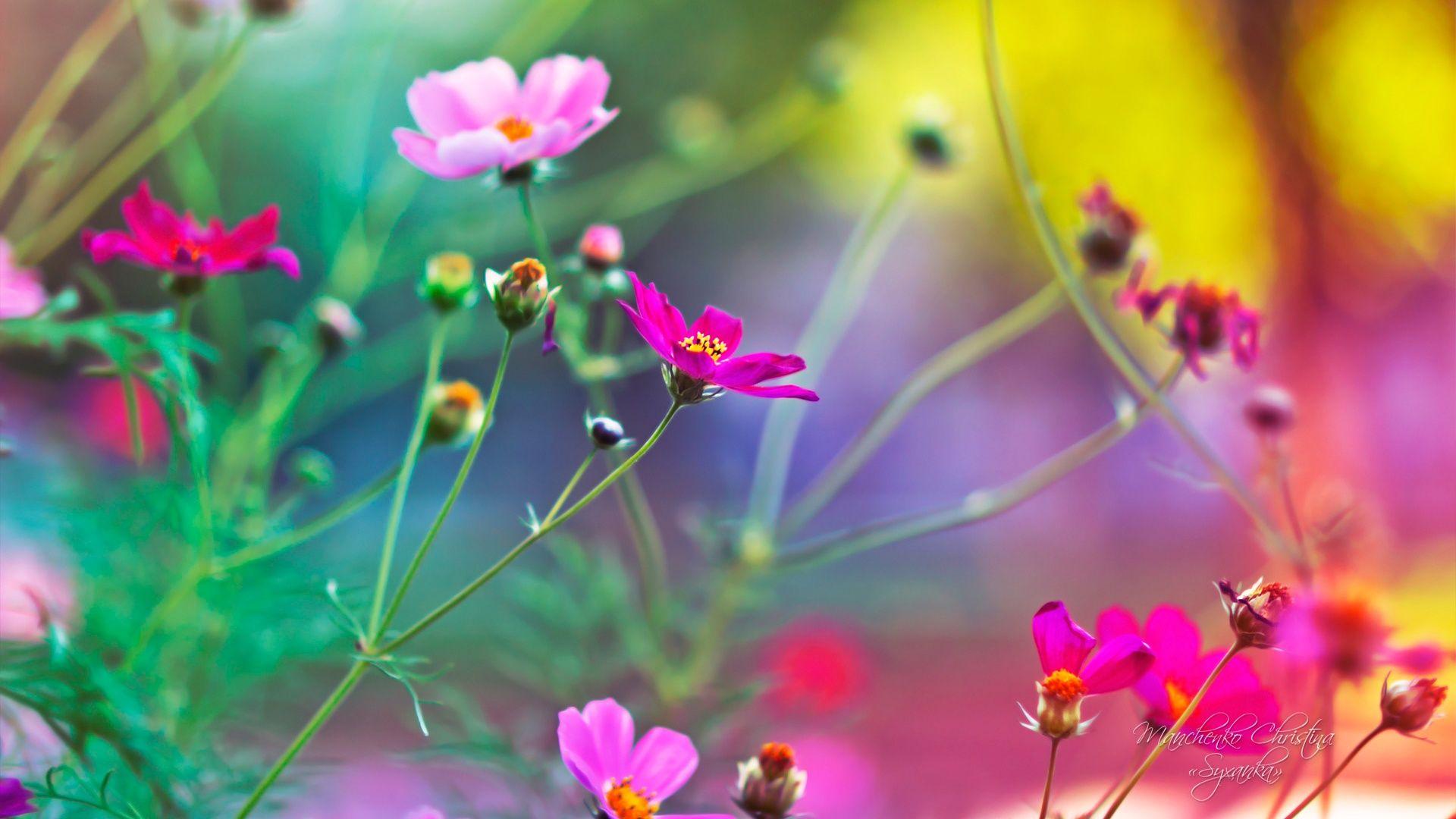 Hd Wallpapers Flowers