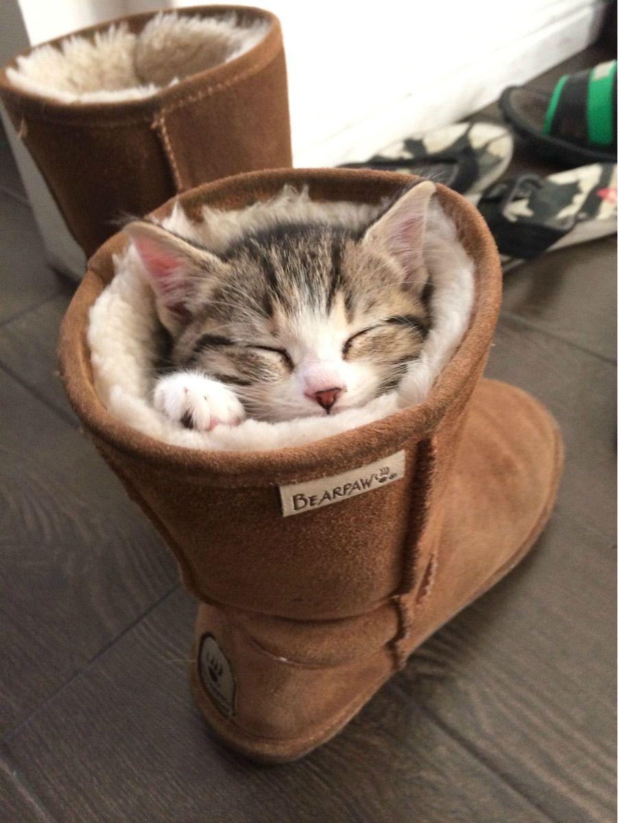 Kitten In A Boot Post Cute Animals Kittens Cutest Crazy Cats