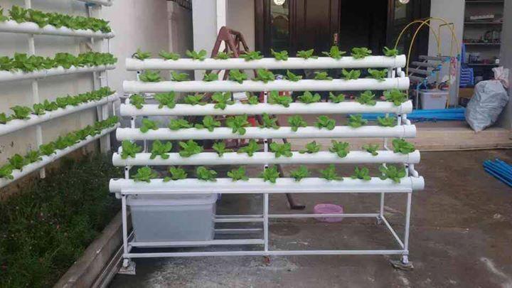 Hydroponics Set Up Hydroponics In Cambodia Grow Hydroponics