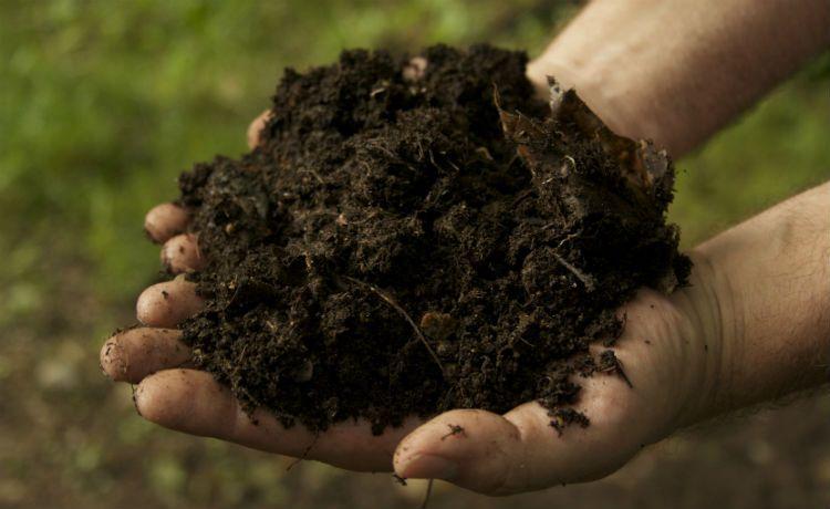 O que é compostagem? Como funciona? Quais são os benefícios para o meio ambiente e para a sociedade?
