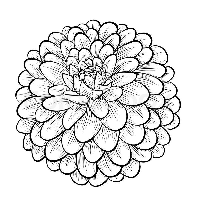 Stock Vector Of Beautiful Monochrome Black And White Dahlia Flower Isolated On White Background Hand Drawn Conto Met Afbeeldingen Mandala Kleurplaten Kleurplaten Leer Tekenen