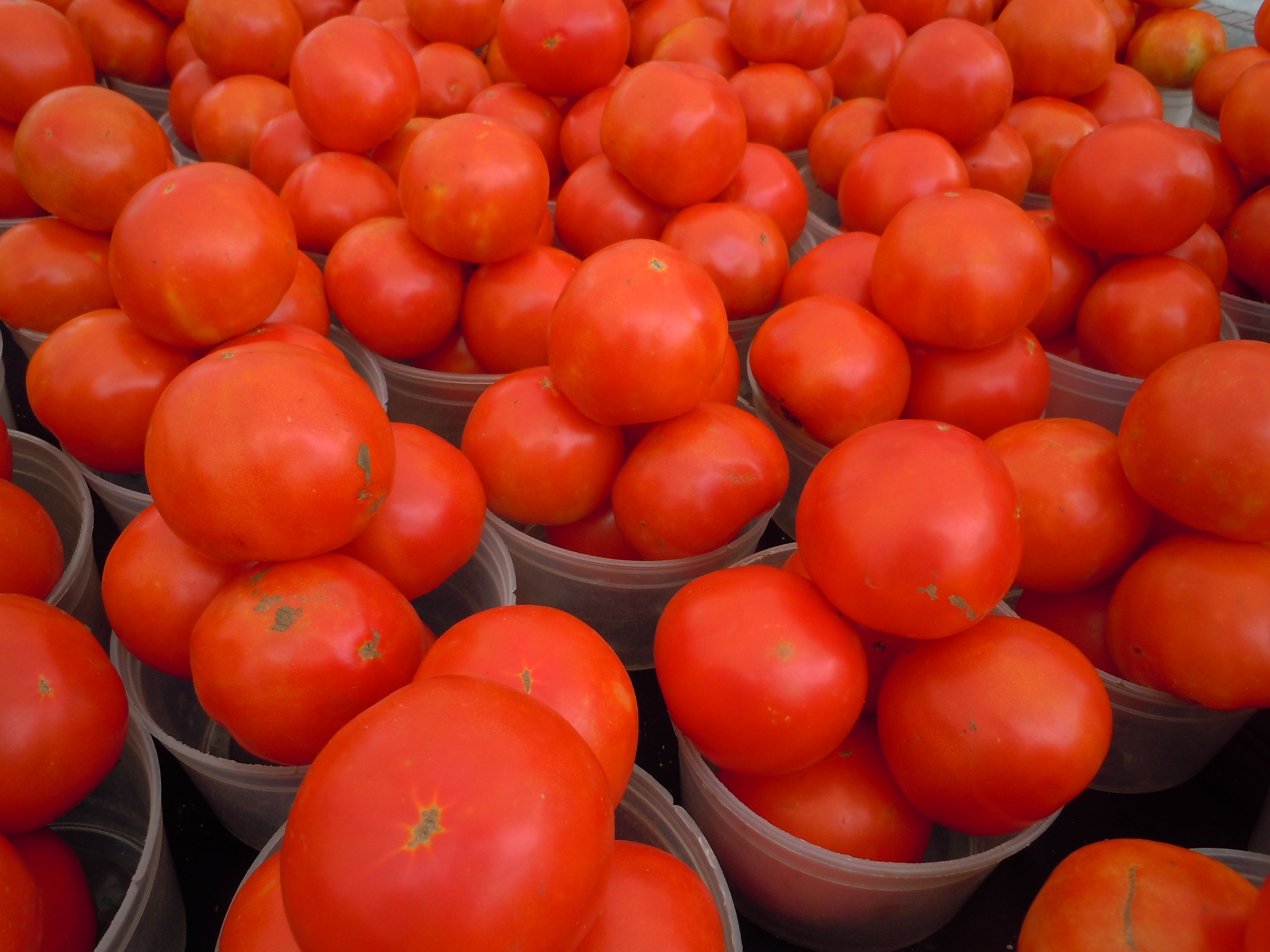 Bright red and delicious tomatoes available at the