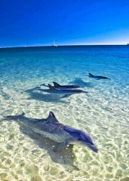 #Delfines