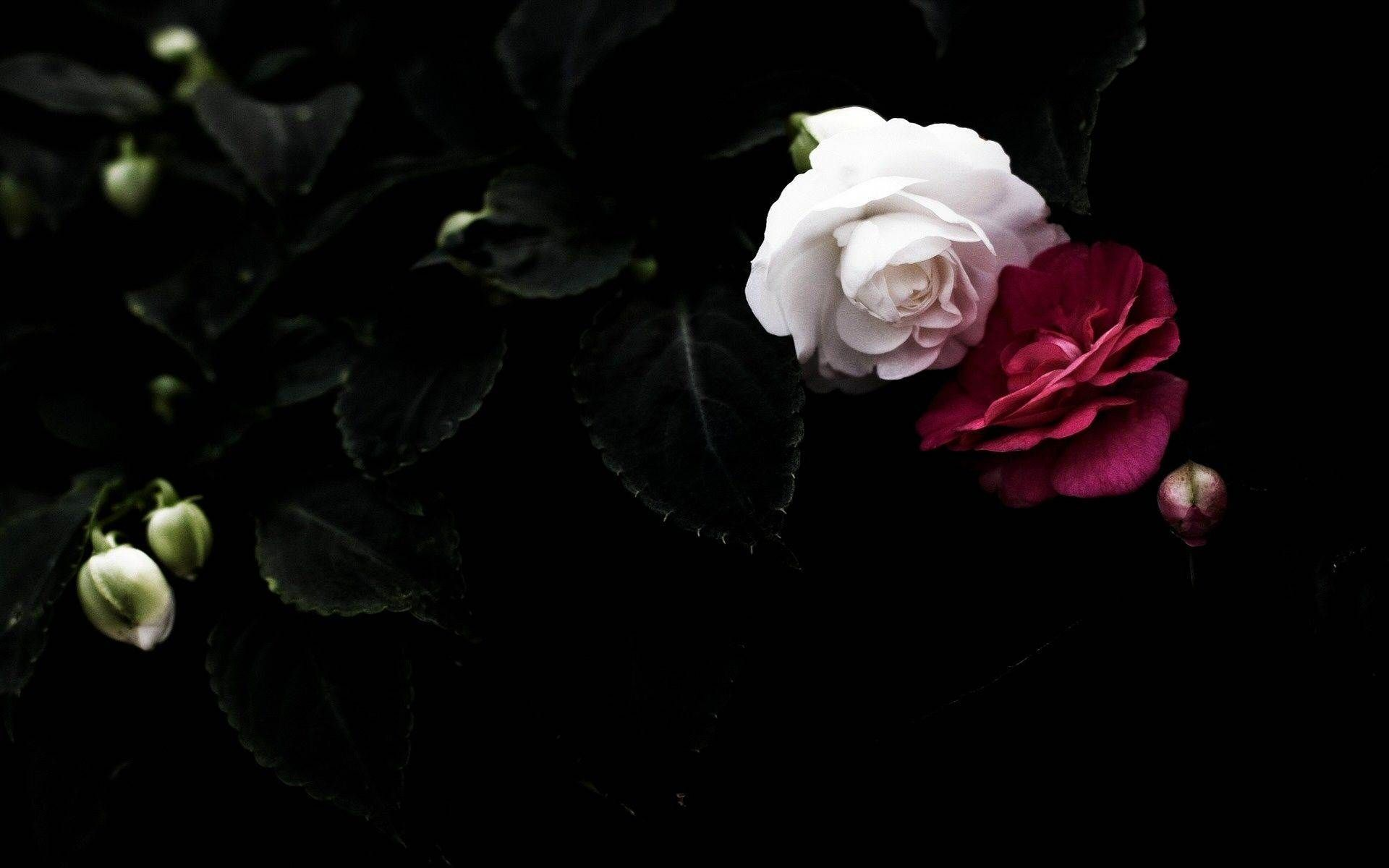 BEAUTIFUL FLOWER WALLPAPERS FREE TO DOWNLOAD Flower images