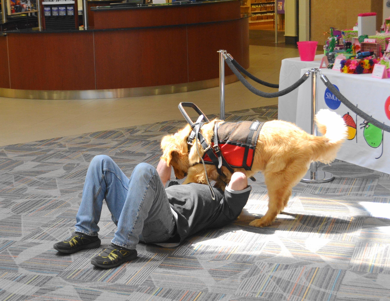 Seizure Service Dogs Seizure Alert Service Dog Aberdeen Dog