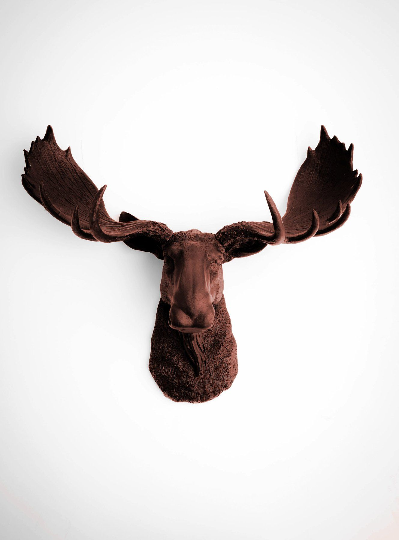The Augustus Moose Head Faux Taxidermy Brown Resin White Faux Taxidermy Moose Head Moose Head Wall Mount
