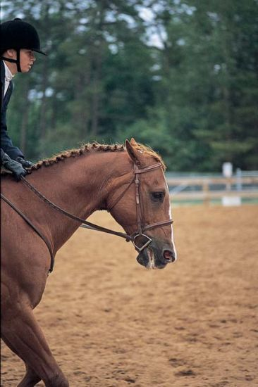 When your horse's ears are pinned back like this, he's ...