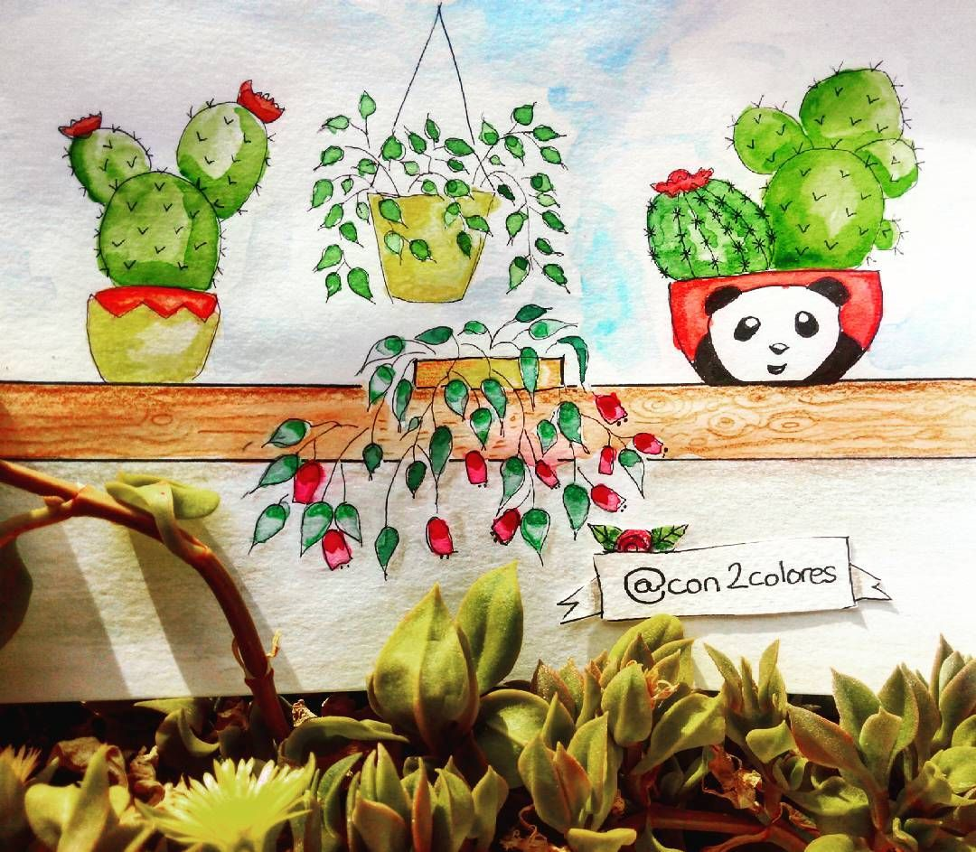 My windows 🌱🌷🐼 #watercolor #cactus #coloringbook #lostocean #oceanoperdido #jardimsecretolove #bosqueencantado #livrodecolorir  #adultcoloring #beatifulcoloring #colorteraphy #coloryourwaytocalm #mycreativeescape #coreart  #colorindooinstagram #watercolorart
