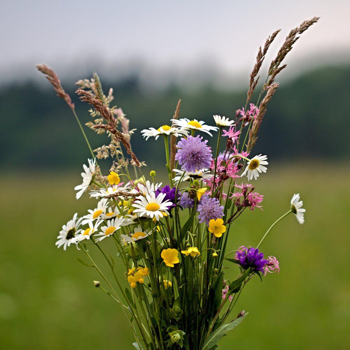 командир фото полевых цветов в хорошем качестве объектива пришлось