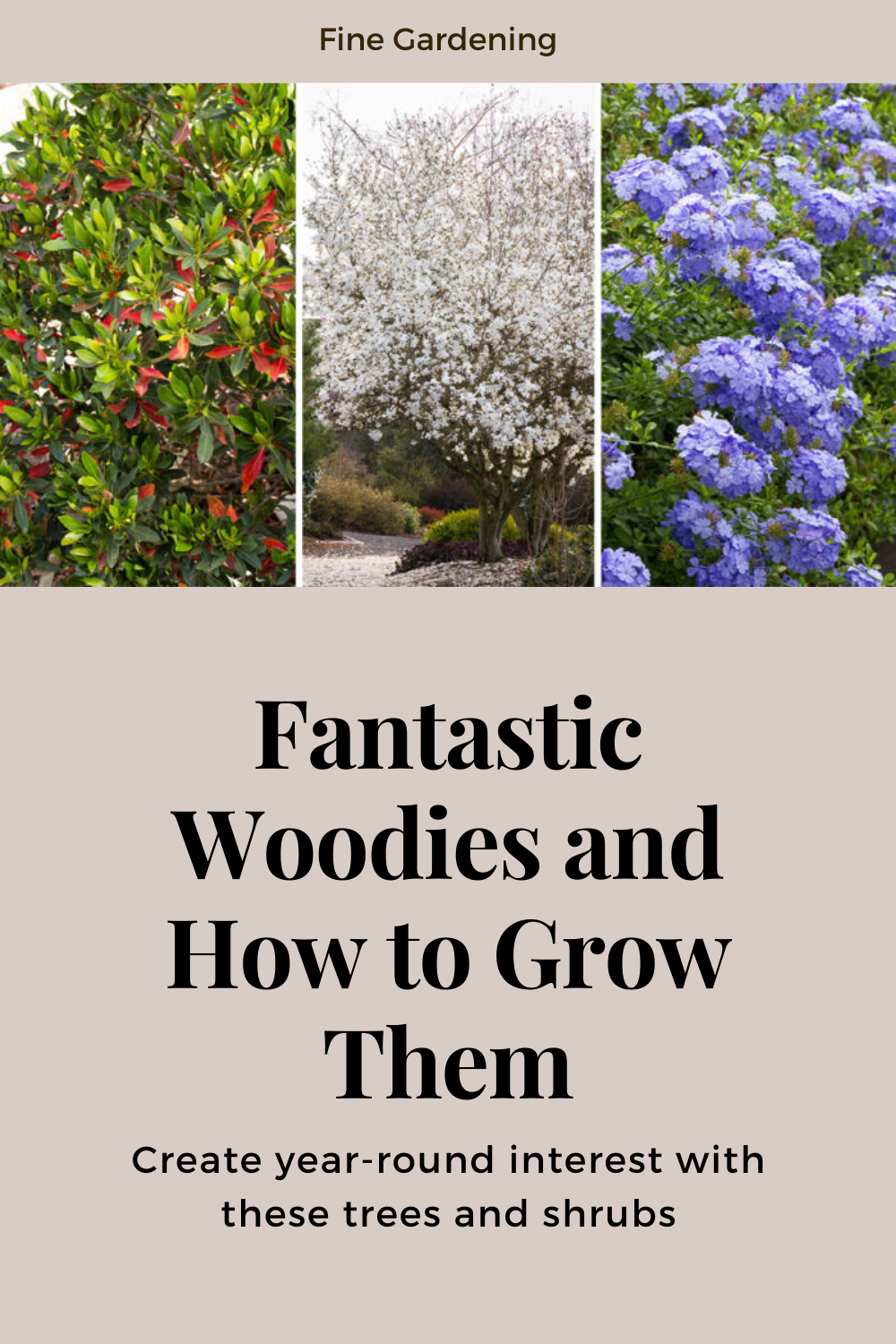 Fantastic Woodies And How To Grow Them Fine Gardening Trees