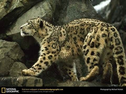 nat geo - Yahoo Image Search Results