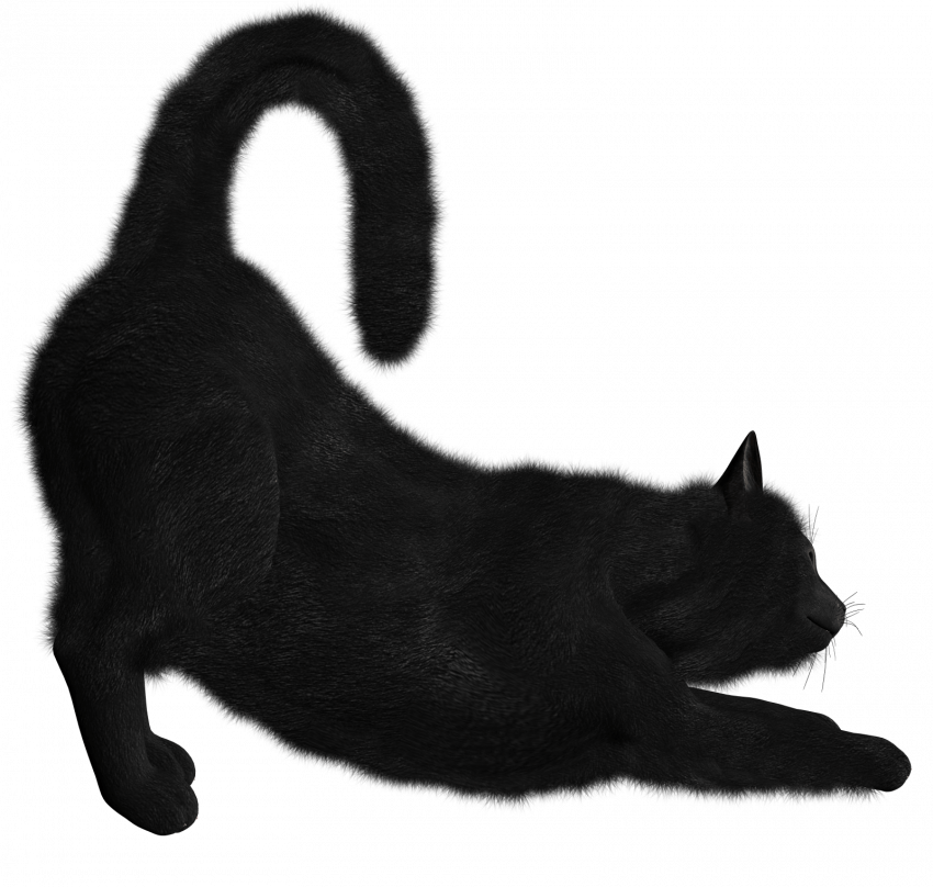 Black Cat Png Transparent Image Cat Download Png File Black Cat Pngget To Download Free Black Cat Png Vector Photo In Image Cat Cats Illustration Cat Photo