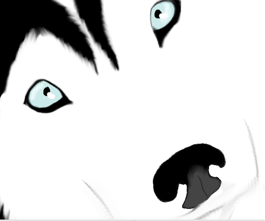 how to draw a siberian husky face - Google Search | Paintings ...