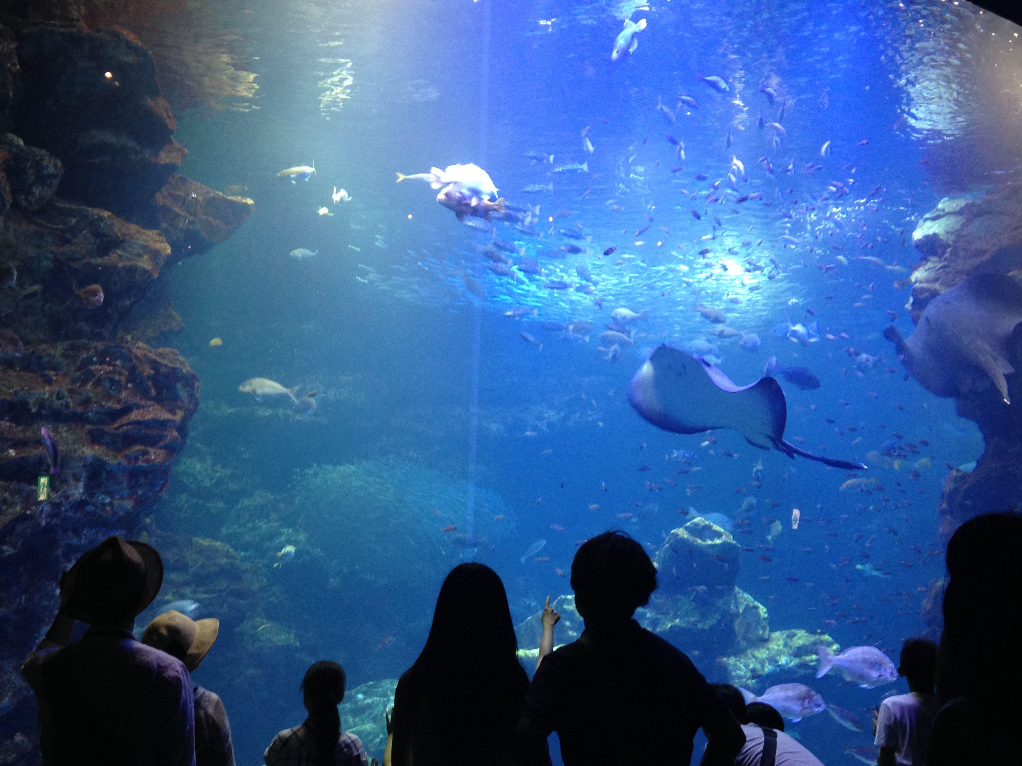 8d6e53db9d639da91e5ea951e85af8d8 Frais De Aquarium Osaka Concept