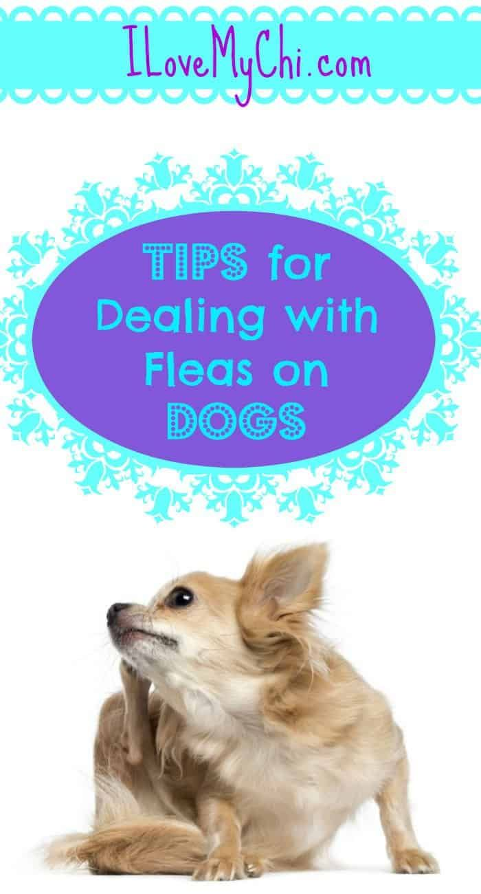 Tips for Dealing with Fleas on Dogs Dog training near me
