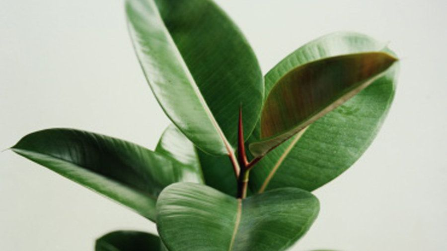 Tough Guy | Feeling blue? You need more greenery in your life. Add these humble houseplants and take a relaxing breath of fresh air