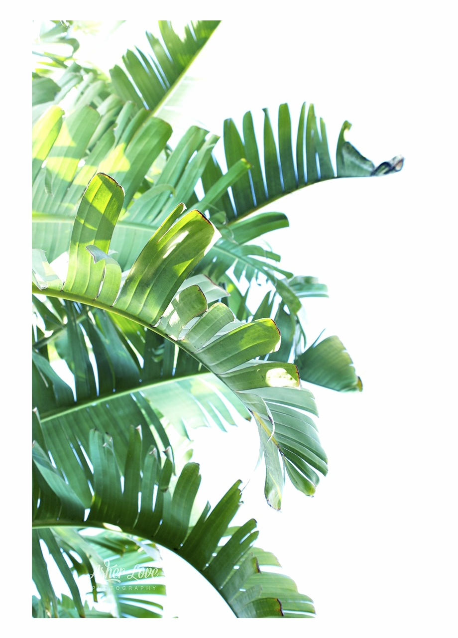 Green Leaf Png Clipart Tropical Leaves Transparent Plant Painting Tropical Leaves Plant Illustration