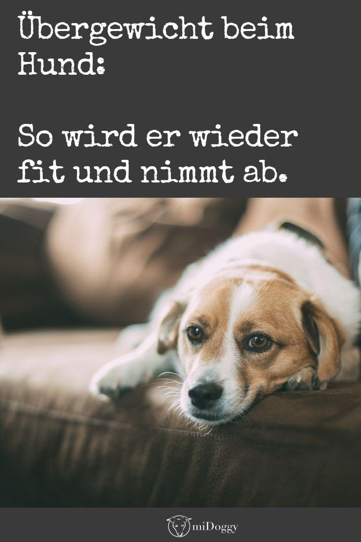 Leichtgewicht Der Abnehmkurs Fur Den Hund Hunde Hunde