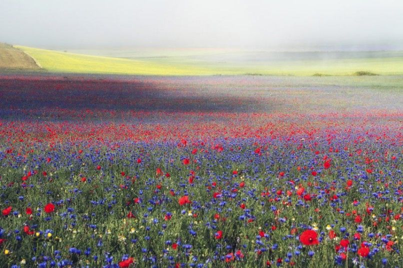 Wildflower Landscapes, second place Stefano Genuardi, Dreamland 1