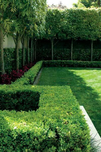 Tree Hedge Courtyard Gardens Design Garden Hedges Outdoor Landscaping