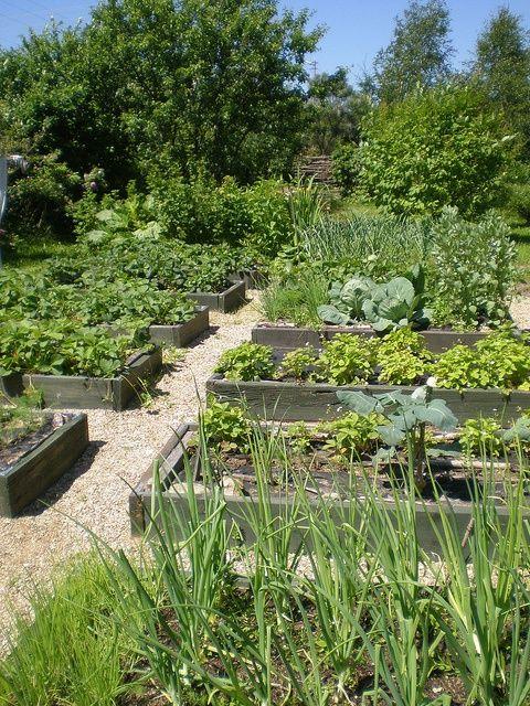 Beds in June Gemüsegarten, Gärten und Bauerngarten