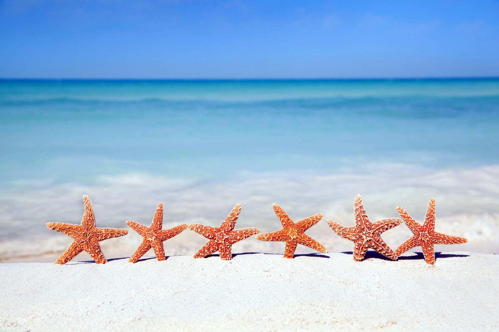 beach & starfish | destination: sunshine | pinterest | cabo, beach