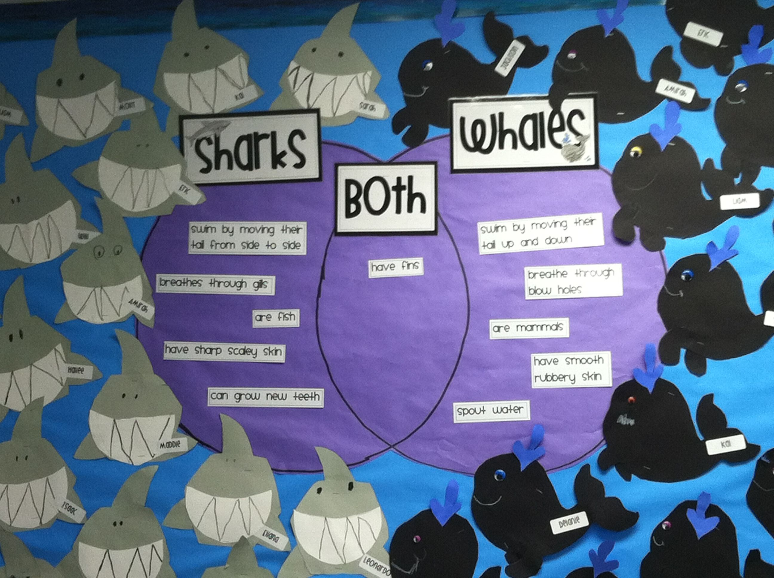 Whales And Shark Venn Diagram For - DIY Wiring Diagrams •