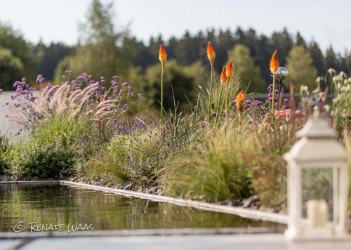 Kniphofia #Stipa Tenuissima #Gräser #Moderner Garten #Wasserbecken