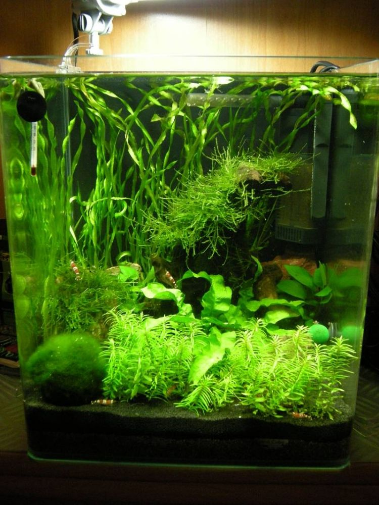 unterwasserpflanzen und kleine fische im nano aquarium cube garnelen pinterest. Black Bedroom Furniture Sets. Home Design Ideas