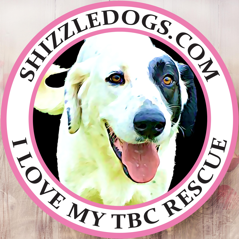 Adopt ruby on dog adoption animal rescue adoption