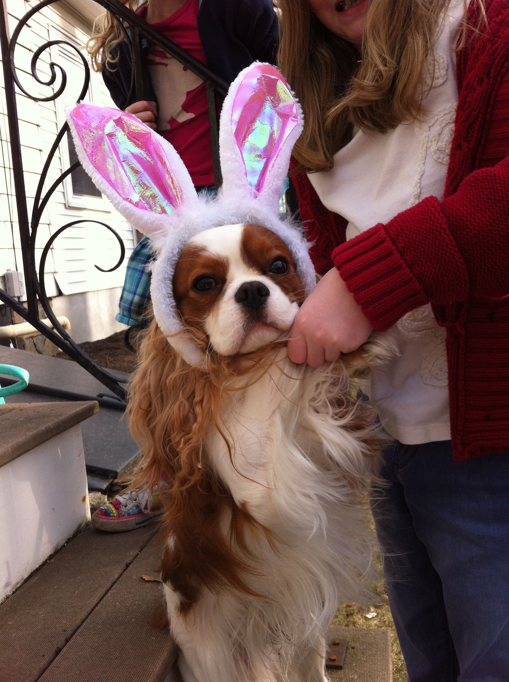 Jack the Easter Bunny