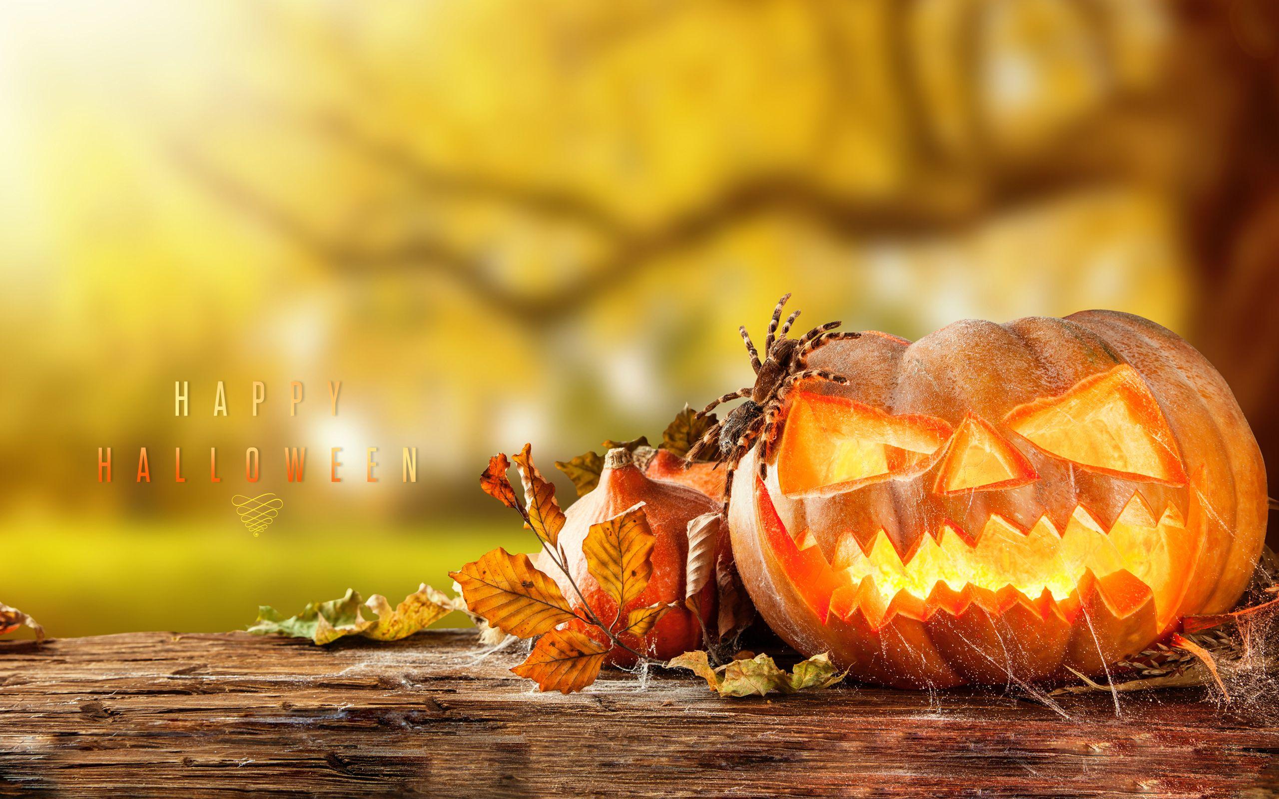 Happy Halloween HD Wallpaper In 1080p Halloween, Evening, HD, Wallpapers,  Bat,