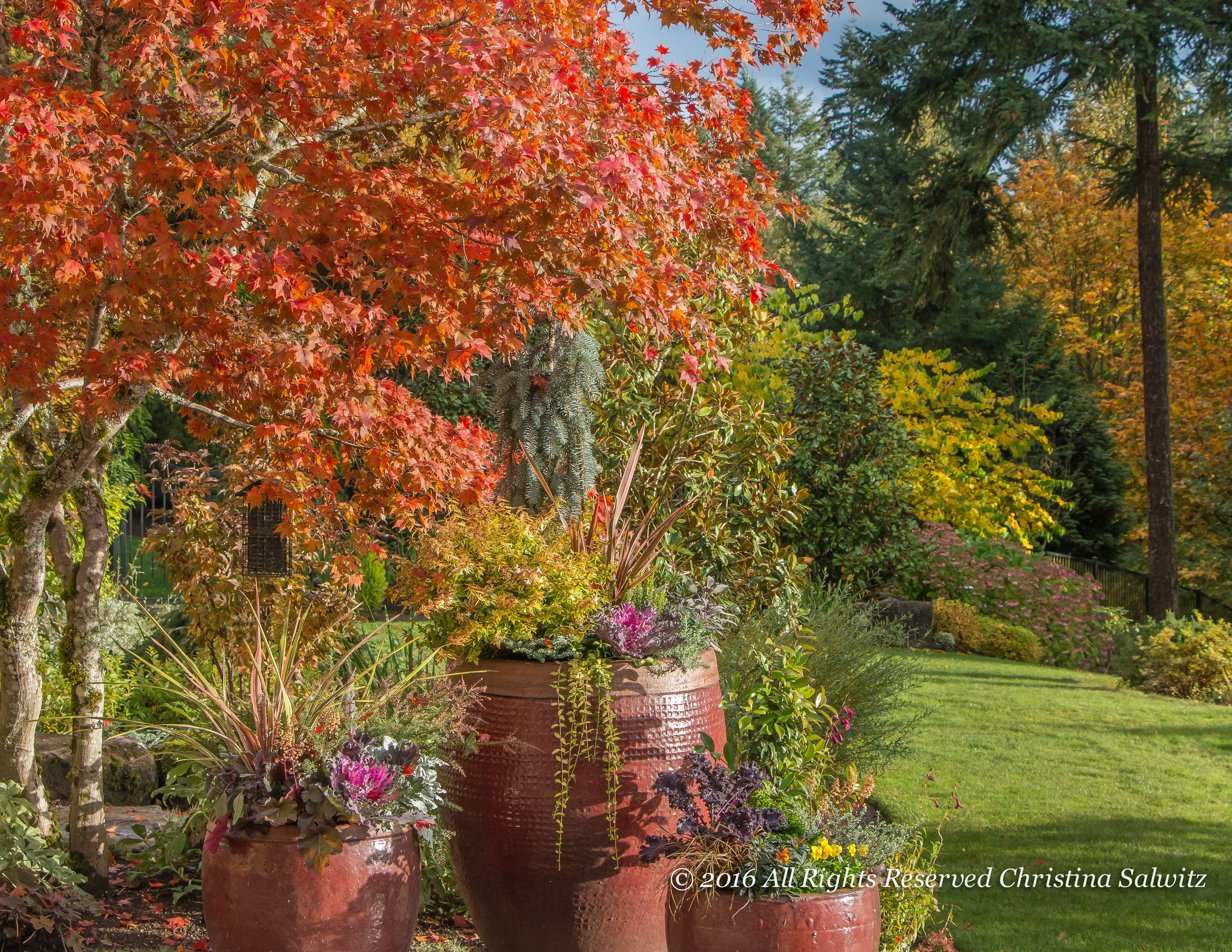 #Fall And 3Winter #ContainerDesigns In The Pacific Northwest! #landscape # Garden