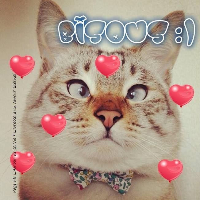 Bisous bisous chats coeurs drole dessiner cats - Dessiner un bisou ...