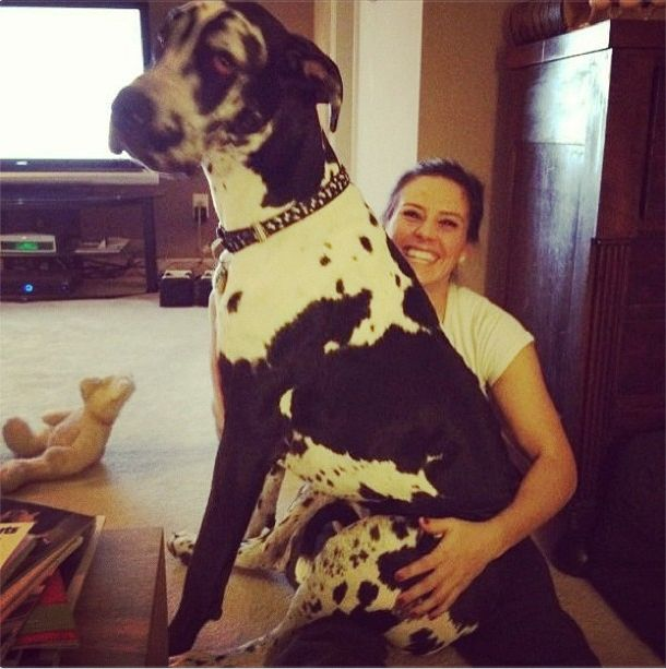 Ali Krieger With A Very Large Dog Look At This Bundle Of Love