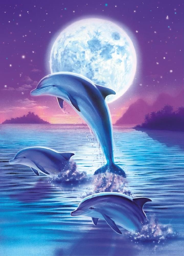 13907 ravensburger  delfine bilder delfin malen delphin