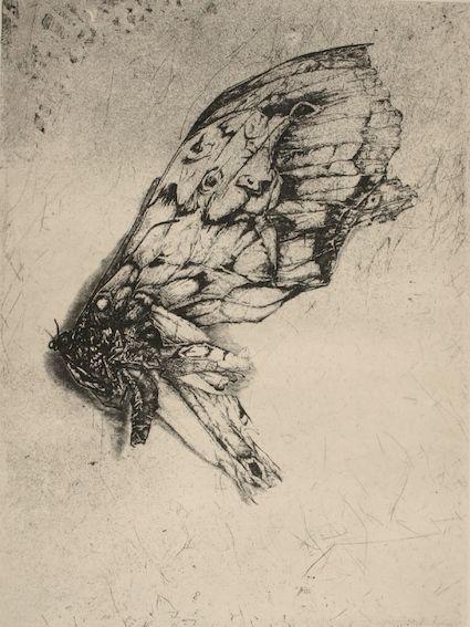 Moth-cellany-2