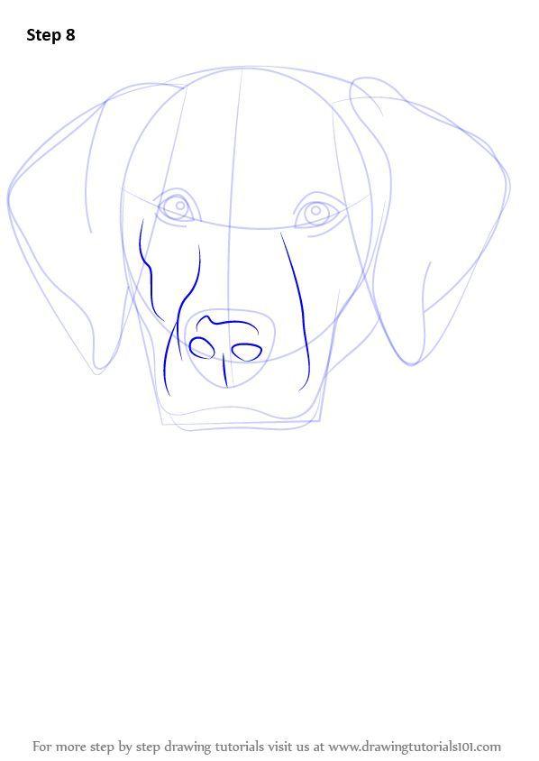 Schritt für Schritt So zeichnen Sie ein Labrador-Gesicht ...
