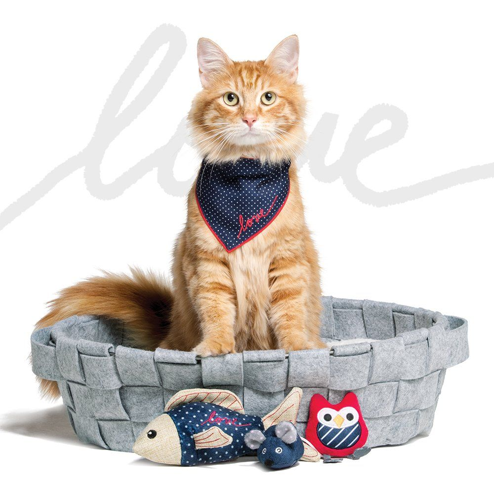 Petsmart Petsmart Twitter Cat Supplies Cats Man And Dog