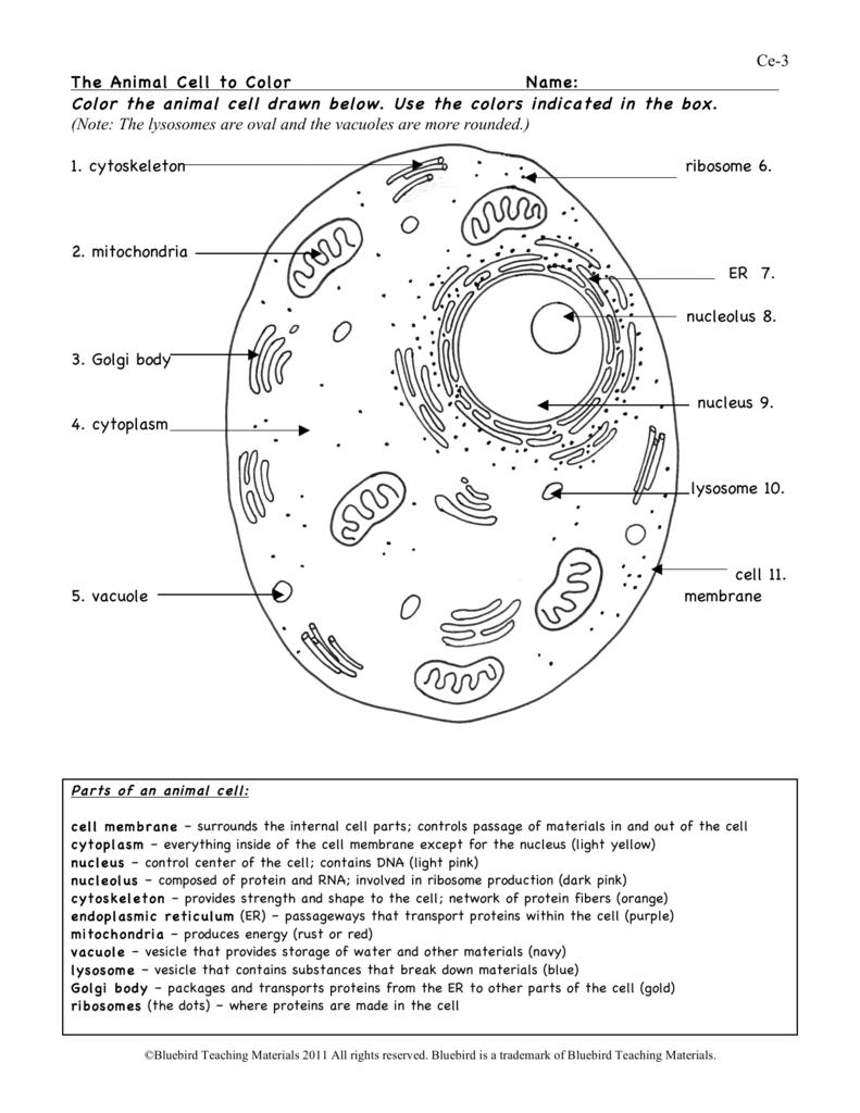 The Animal Cell Worksheet Animal Cell Animal Cells Worksheet Cells Worksheet [ 1024 x 791 Pixel ]