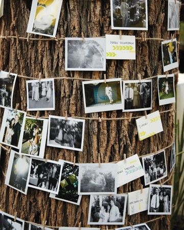rustic wedding photo display arbres deco pinterest. Black Bedroom Furniture Sets. Home Design Ideas