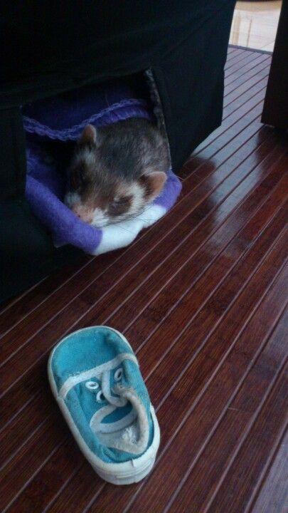 Baltazar and his fav shoe