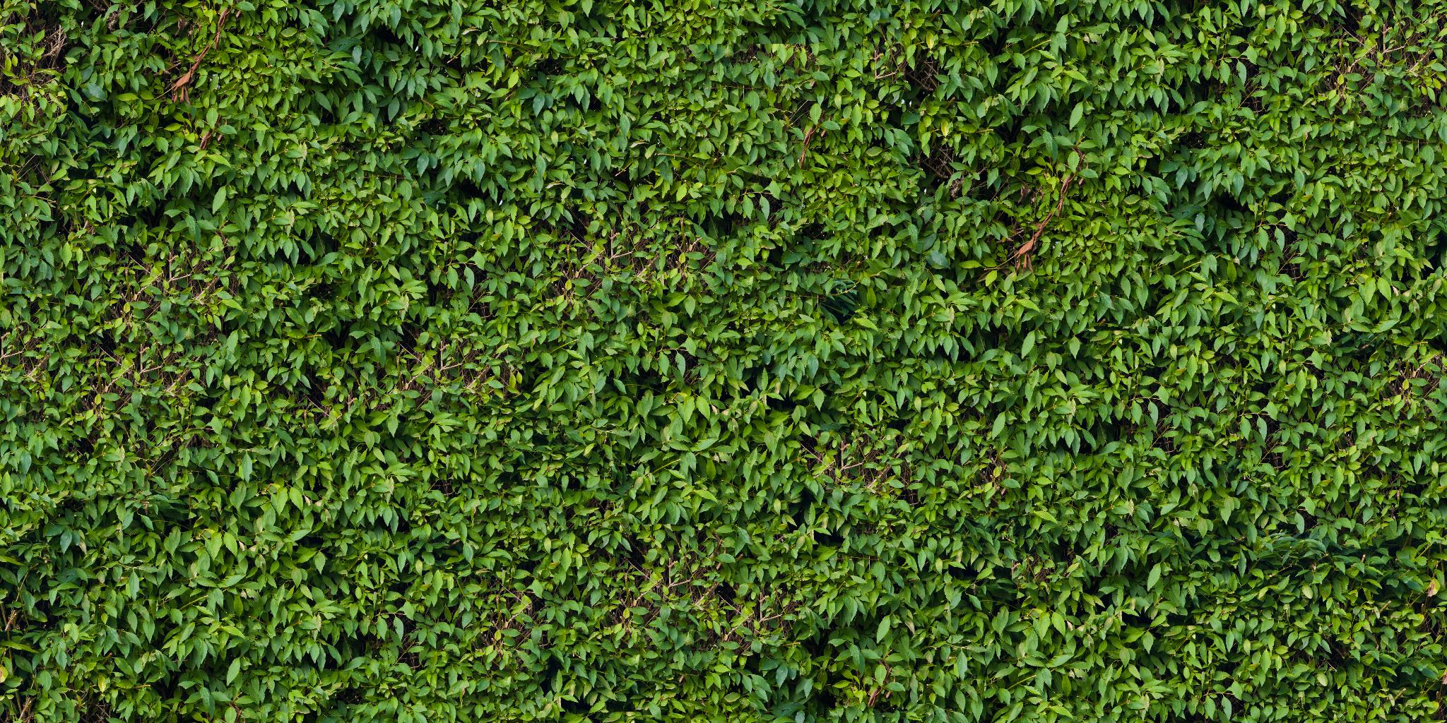 Vegetation Hedge 24 Png 2048 1024 Texture Hedges Vegetation