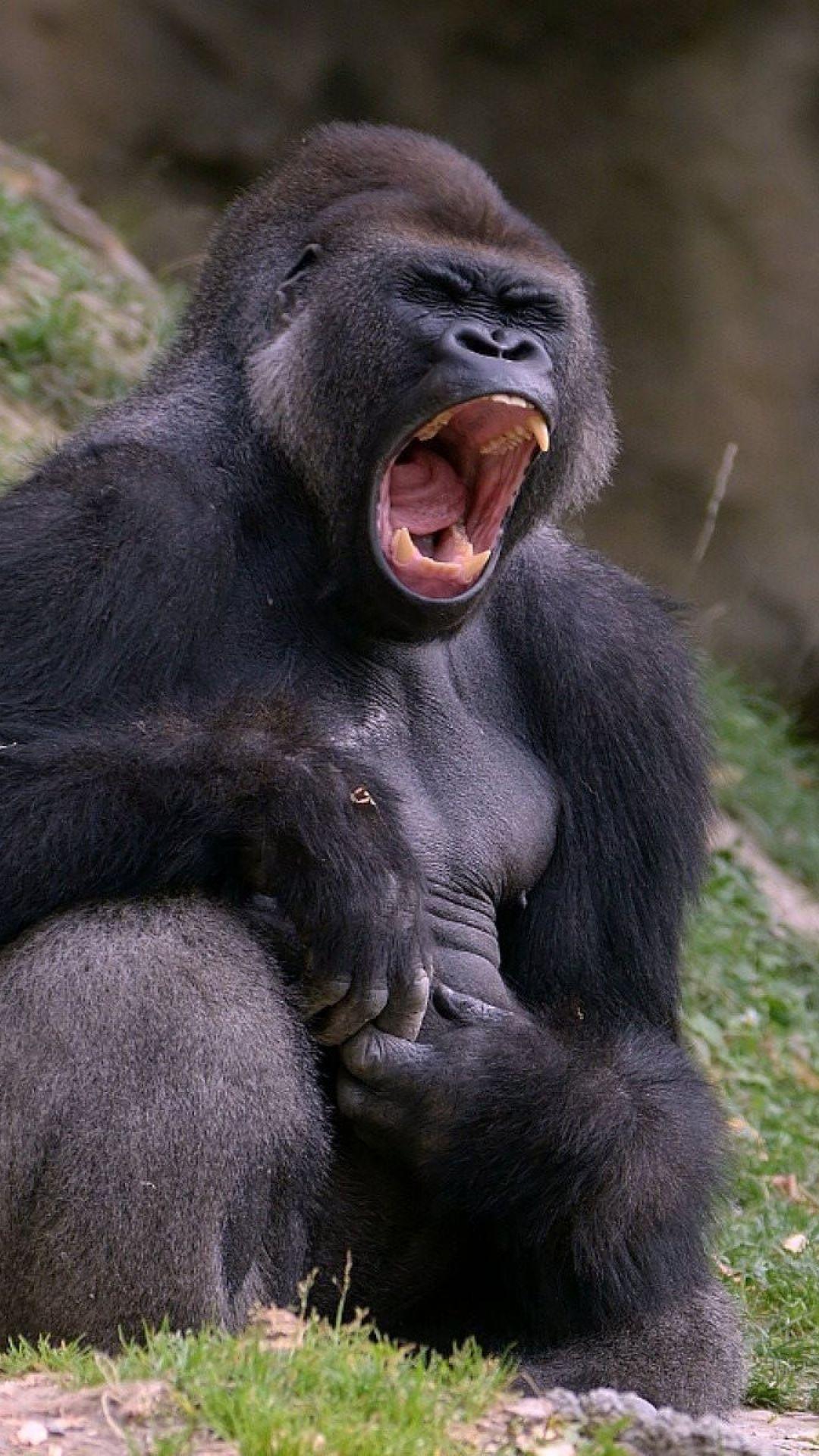 die besten 25 gorilla kaffee ideen auf pinterest affe baby gorillas und baby orang utan. Black Bedroom Furniture Sets. Home Design Ideas