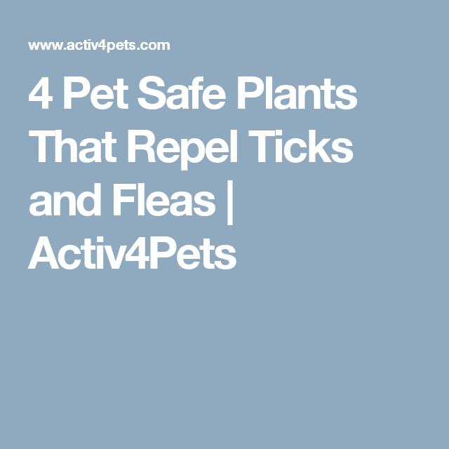 4 Pet Safe Plants That Repel Ticks And Fleas