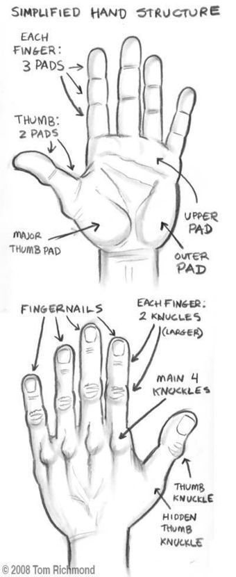 Simplified Hand Structure Drawing Reference Learn To Draw